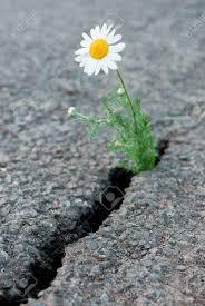 flowers crack