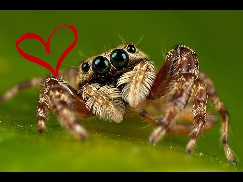 spider cute